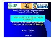 microalgues - Jacquet Stephan