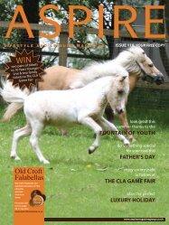 Old Croft Falabellas - Aspire Magazine