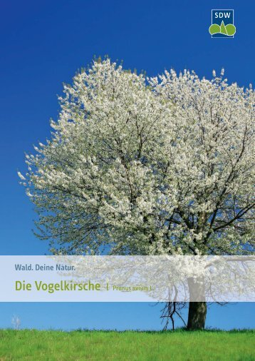 Die Vogelkirsche - Schutzgemeinschaft Deutscher Wald