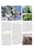 Die Vogelkirsche - Schutzgemeinschaft Deutscher Wald - Seite 3