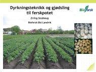 Dyrkingsteknikk og gjødsling til ferskpotet - Norsk ...