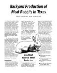 Backyard Production of Meat Rabbits in Texas - World Rabbit ... - Page 3