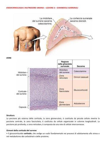ENDOCRINOLOGIA E NUTRIZIONE UMANA ... - life and fitness