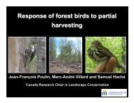 Response of forest birds to partial harvesting - Fundy Model Forest