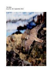 2012 Sept Eider - Argyll Bird Club