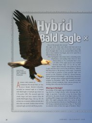 What Age is This Eagle? - American Birding Association
