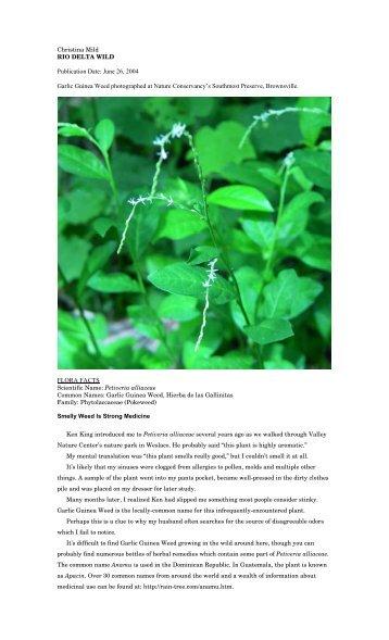 """Petiveria alliaceae - Christina Mild's """"Rio Delta Wild"""""""