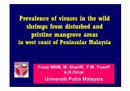 Prevalence of viruses in the wild shrimps from disturbed ... - Library