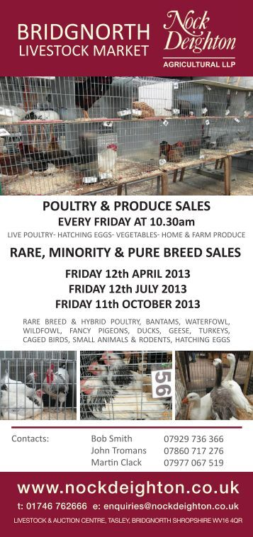 Rare Minority and Pure Breed Poultry - Auction Mart