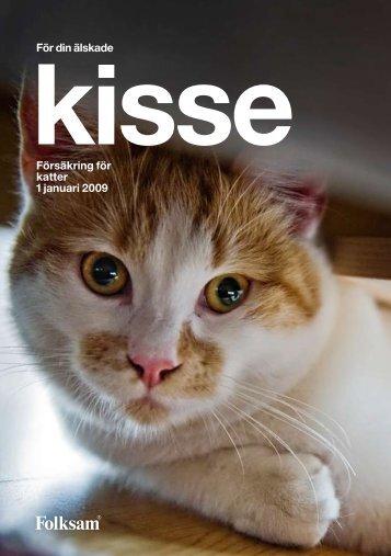 Försäkring för katter 1 januari 2009 För din älskade - Folksam