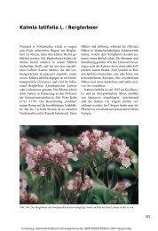 Kalmia latifolia L. / Berglorbeer