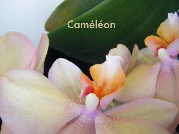 Download Caméléon brochure - Carpet Sign-Carpet Sign
