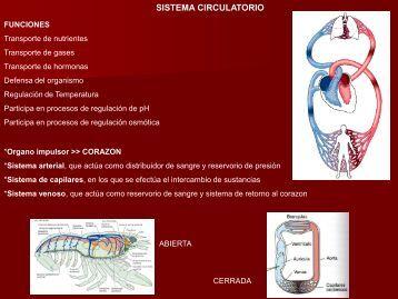9- Sistema Circulatorio