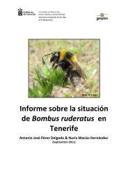 Informe sobre la situación de Bombus ruderatus ... - Interreg Bionatura