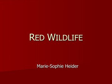 RED WILDLIFE - The colour RED