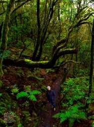Inaugurado en 1981, el Parque Nacional del Garajonay, en el ...