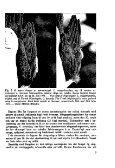 Sterna, bind 15 nr 1 (PDF-fil) - Museum Stavanger - Page 5