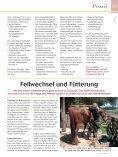 Salzburg - Reitwelt - Seite 7