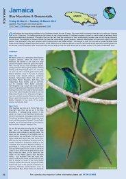 Jamaica - Ornitholidays