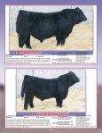 SKOR Simmental Bull Sale - Transcon Livestock Corporation - Page 4
