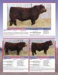 Skor Simmentals Bull Sale - Transcon Livestock Corporation - Page 4