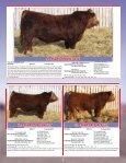 Skor Simmentals Bull Sale - Transcon Livestock Corporation - Page 6