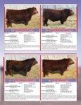 Skor Simmentals Bull Sale - Transcon Livestock Corporation - Page 7