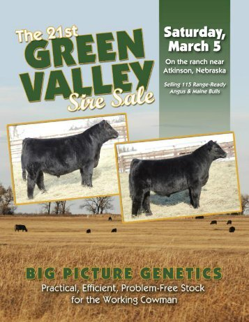 Big Picture Maine-Anjou Sires - PrimeTIME AgriMarketing