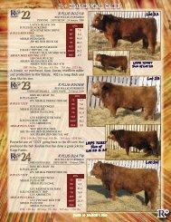 Lots 22-35 - SaskLivestock