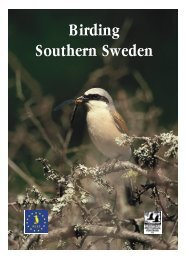Birding Southern Sweden (large PDF file (5 MB) - Tåkerns Fältstation