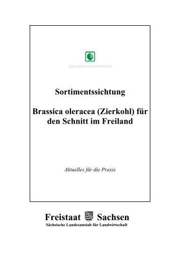 Sortimentssichtung Brassica oleracea (Zierkohl) - Landwirtschaft in ...