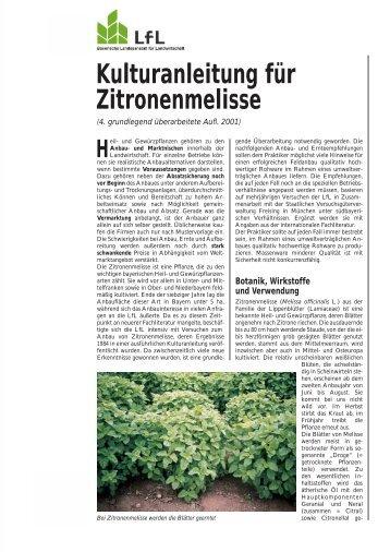 Kulturanleitung für Zitronenmelisse - Bayerische Landesanstalt für ...