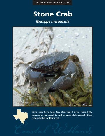 Stone Crab - The State of Water