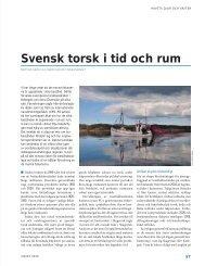 Svensk torsk i tid och rum - Havet.nu