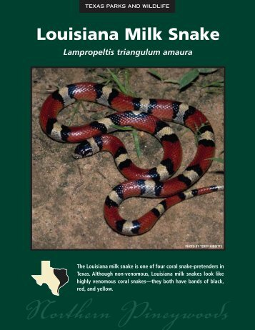 Louisiana Milk Snake - The State of Water