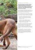 Vet Files - WSPA's Vets - Animal Mosaic - Page 3