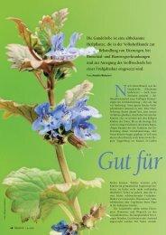 Gundelrebe, eine altbekannte Heilpflanze - Natürlich