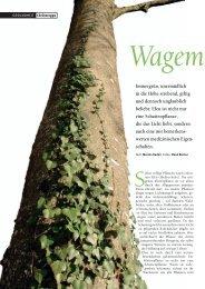 Efeu ist nicht nur eine Schattenpflanze - Natürlich