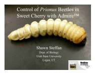 Control of Prionus Beetles in Sweet Cherry with Admire - Utah Pests ...