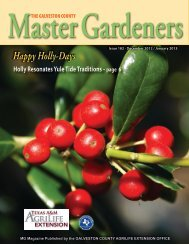 Happy Holly-Days - Aggie Horticulture - Texas A&M University
