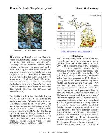 Cooper's Hawk - Michigan Breeding Bird Atlas Website