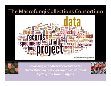 Role for citizen mycologists in the MaCC Project  - North American ...