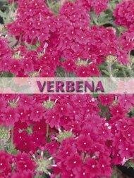 PDF (Verbena)