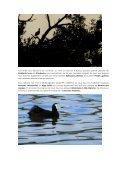 M ARO C - Nos oiseaux - Page 4