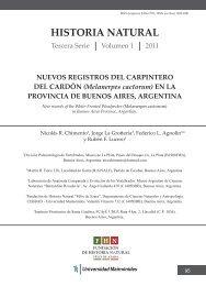 Melanerpes cactorum - Fundación de Historia Natural Félix de Azara
