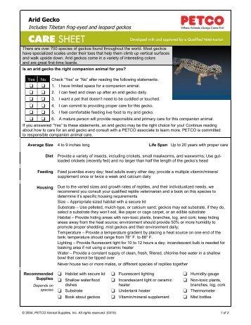 Arid Gecko - Petco