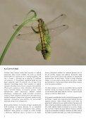 5. številka Novic Notranjskega regijskega parka - Presihajoče ... - Page 4