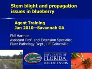 Stem Blight and Propagation Issues in Blueberry