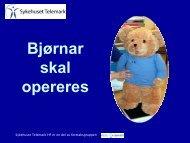 Bjørnar skal opereres - bildeserie - Sykehuset Telemark