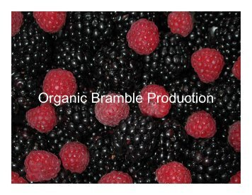 Organic Bramble Production Insects